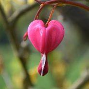 Menus de la St Valentin 13-14 février 2021
